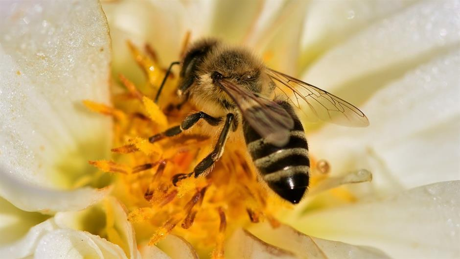 塞爾維亞生物學家對安吉麗娜朱莉支持的聯合國教科文組織蜜蜂運動提出異議